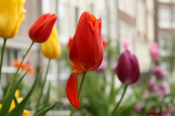 Çiçeklere Dikkat
