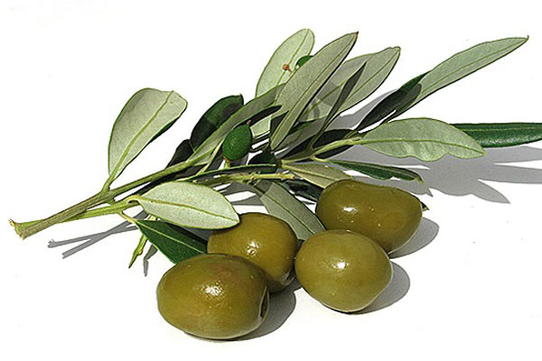 doğal zeytin